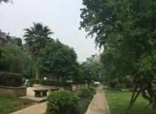 柴桑春天二区