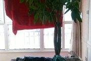 麦积区,麦积,麦积东安佳苑,3室2厅,113㎡